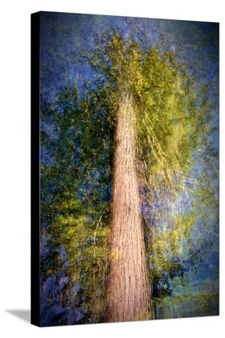 The Ent-Ursula Abresch-Stretched Canvas Print