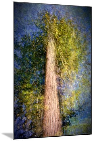 The Ent-Ursula Abresch-Mounted Photographic Print