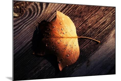 Autumn Arrives-Philippe Sainte-Laudy-Mounted Photographic Print