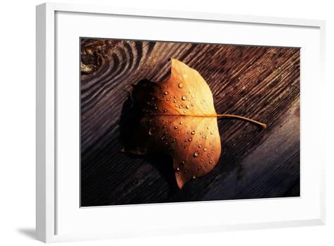 Autumn Arrives-Philippe Sainte-Laudy-Framed Art Print