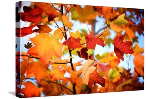 Autumn Paintography-Philippe Sainte-Laudy-Stretched Canvas Print