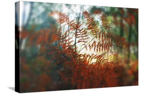 Autumn Light-Viviane Fedieu Daniel-Stretched Canvas Print