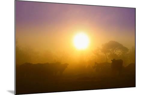 Country Scene-Viviane Fedieu Daniel-Mounted Photographic Print