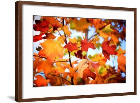 Autumn Paintography-Philippe Sainte-Laudy-Framed Art Print