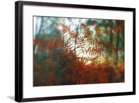 Autumn Light-Viviane Fedieu Daniel-Framed Art Print