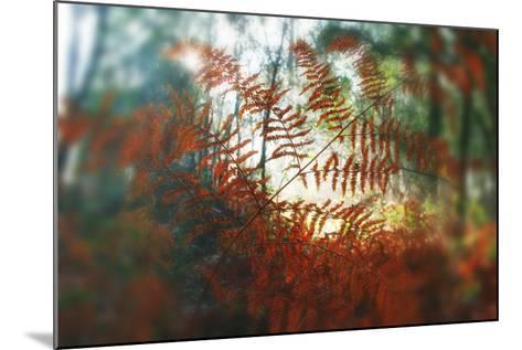 Autumn Light-Viviane Fedieu Daniel-Mounted Photographic Print