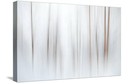 Fog-Ursula Abresch-Stretched Canvas Print