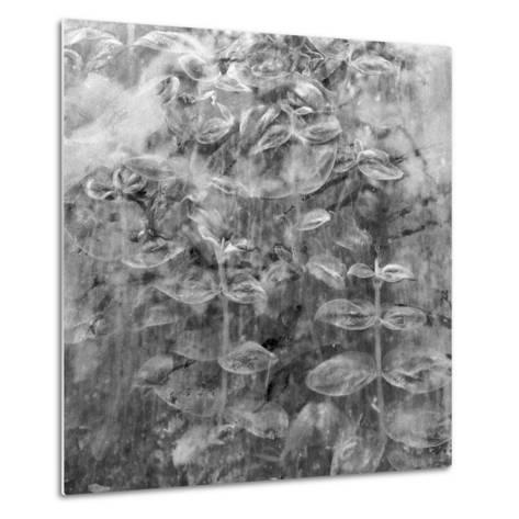 Plant Pressed Up to Glass in a Greenhouse Creates an Abstract Pattern-Keenpress-Metal Print