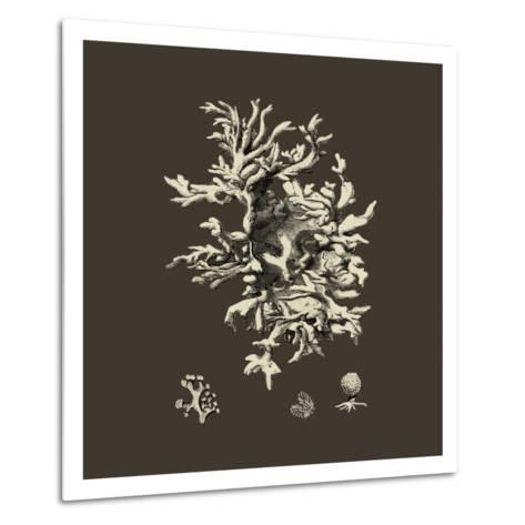 Chocolate & Tan Coral III-Vision Studio-Metal Print
