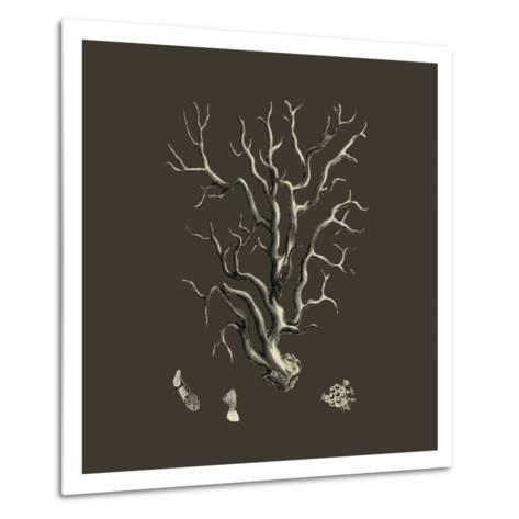 Chocolate & Tan Coral I-Vision Studio-Metal Print