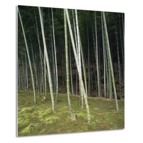 Bamoo Forest in Kyoto-Micha Pawlitzki-Metal Print