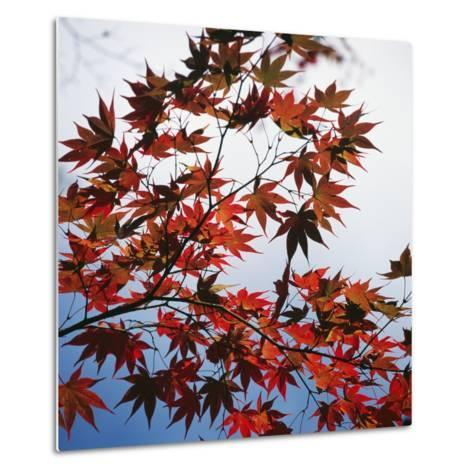Colorful leaves-Micha Pawlitzki-Metal Print