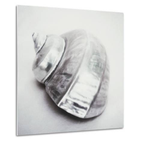 Pearl Turban Shell-John Kuss-Metal Print