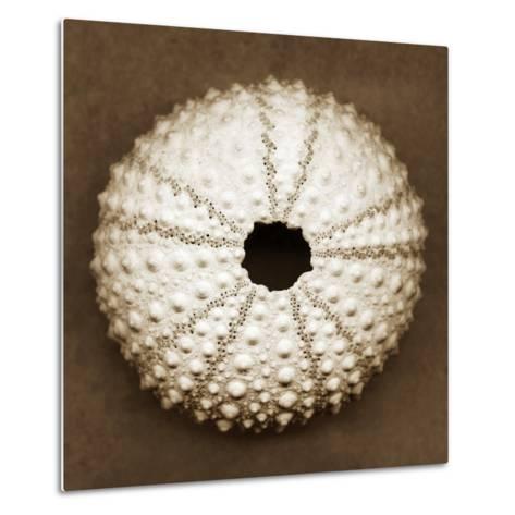 Pink Sea Urchin-John Kuss-Metal Print