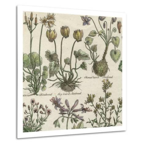 Delicate Garden I-Vision Studio-Metal Print