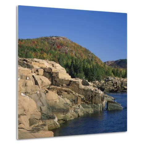 Gulls on Rocks Along the Coastline, in the Acadia National Park, Maine, New England, USA-Roy Rainford-Metal Print