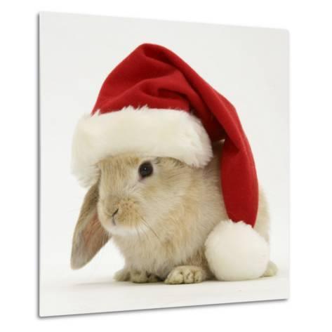 Rabbit Wearing a Father Christmas Hat-Jane Burton-Metal Print