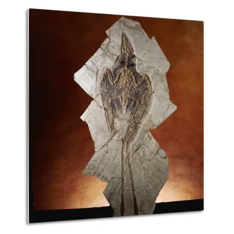 Fossil Bird-Layne Kennedy-Metal Print