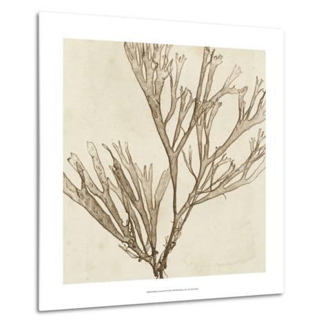 Brilliant Seaweed VII--Metal Print