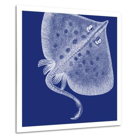 Saturated Sea Life III-Vision Studio-Metal Print