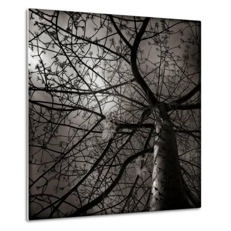 Looking Up at a Tree with Flowers-Luis Beltran-Metal Print