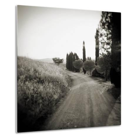 Country Lane with Cypress Trees in Early Morning Sunlight, San Quirico D'Orcia, Tuscany, Italy-Lee Frost-Metal Print