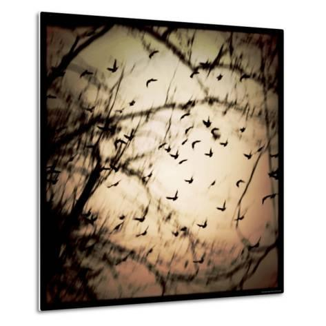 Birds Flying from Tree-Ewa Zauscinska-Metal Print