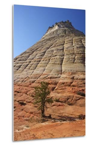 Checkerboard Mesa, Formed of Navajo Sandstone, Zion National Park, Utah, United States of America-Peter Barritt-Metal Print