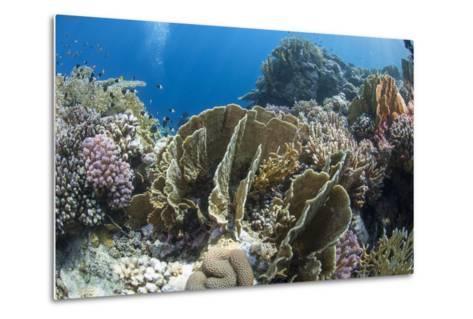 Tropical Coral Reef Scene in Natural Lighting, Ras Mohammed Nat'l Pk, Off Sharm El Sheikh, Egypt-Mark Doherty-Metal Print