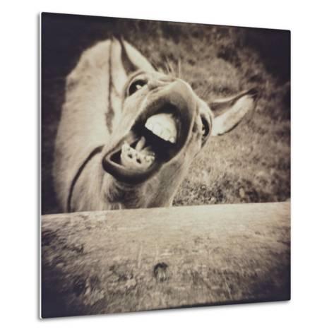 Bleating  Goat-Theo Westenberger-Metal Print
