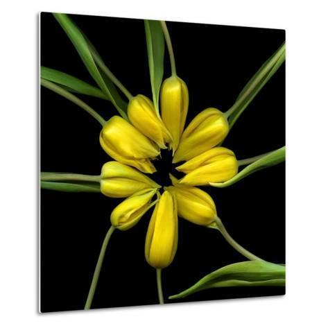 Yellow Tulips-Magda Indigo-Metal Print