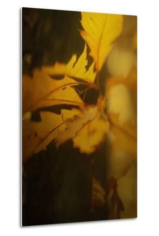 Study of Autumn Leaves VI-Mia Friedrich-Metal Print