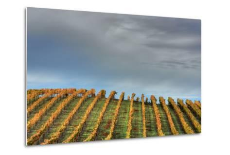 Sky and Vine-Vincent James-Metal Print
