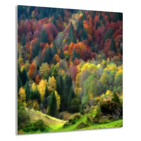 Autumn Erupting-Philippe Sainte-Laudy-Metal Print