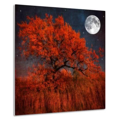 Halloween Color-Philippe Sainte-Laudy-Metal Print