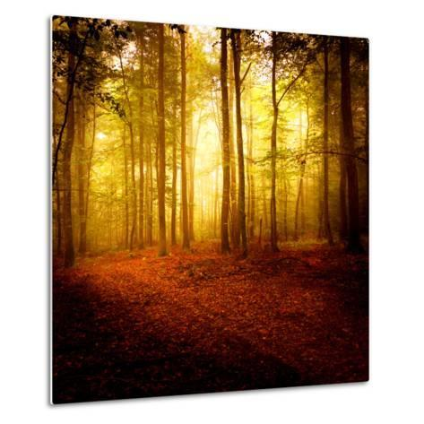 The Smell of Autumn-Philippe Sainte-Laudy-Metal Print