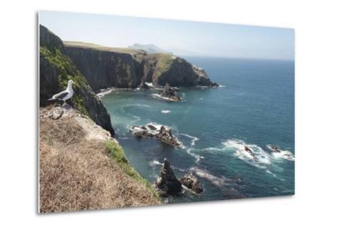 Gull Looking over the Ocean, Anacapa, Channel Islands National Park, California, USA-Antonio Busiello-Metal Print