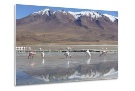 Flamingoes at Laguna Adeyonda on Altiplano, Potosi Department, Bolivia, South America-Ian Trower-Metal Print