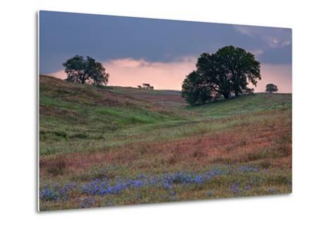 Late Afternoon, Central California-Vincent James-Metal Print