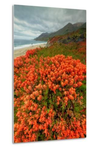 Summer Morning Coastal Color-Vincent James-Metal Print