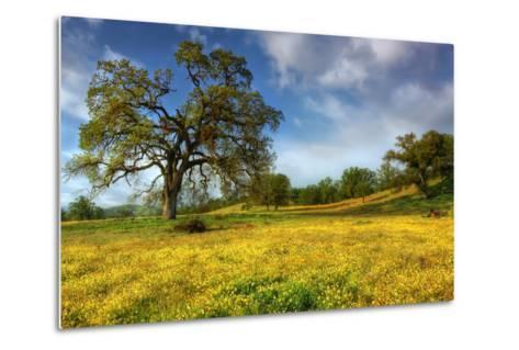 Spring at Shell Creek-Vincent James-Metal Print