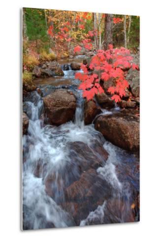 Autumn Stream Through Acadia-Vincent James-Metal Print