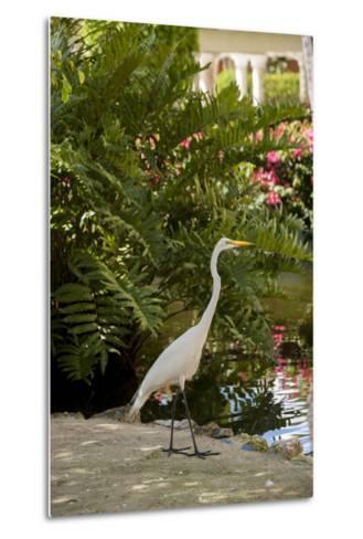 White Egret Tropical Bird, Bavaro, Higuey, Punta Cana, Dominican Republic-Lisa S^ Engelbrecht-Metal Print