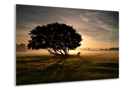 A Solitary Fallen Live Tree Under a Dramatic Sky on a Misty Morning-Alex Saberi-Metal Print