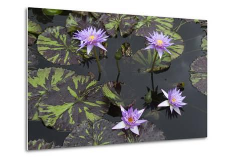 Lily Pond with Water Lilies, New Orleans Botanical Garden, New Orleans, Louisiana, USA-Jamie & Judy Wild-Metal Print
