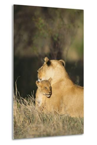 A Lion Cub Nestles Against Its Mother-Norbert Rosing-Metal Print