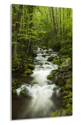 Stream at Roaring Fork Trail in the Smokies, Great Smoky Mountains National Park, Tennessee, USA-Joanne Wells-Metal Print