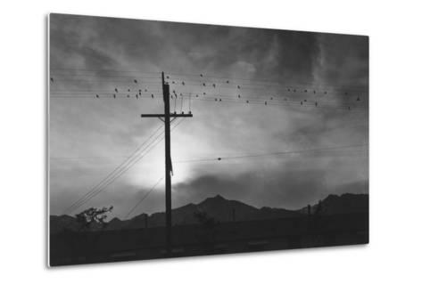Birds on Wire, Evening, Manzanar Relocation Center', 1943 by Ansel Adams--Metal Print