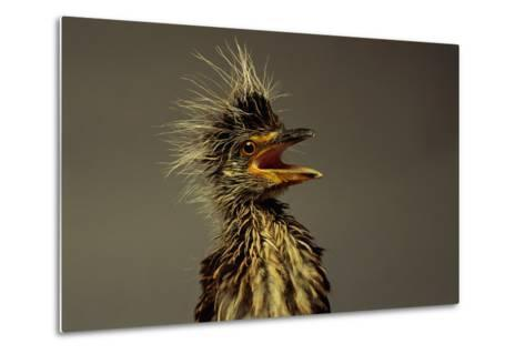 A Juvenile Black-crowned Night Heron-Scott Sroka-Metal Print