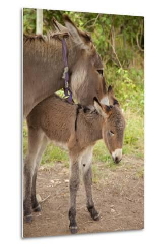 Donkey Mother and Foal-Brian Jannsen-Metal Print